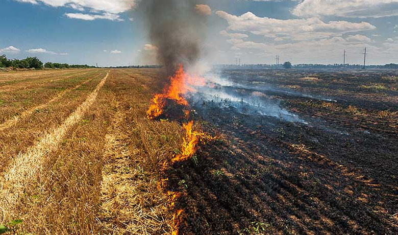 Paddy Residue Burning Drivers Challenges And Potential