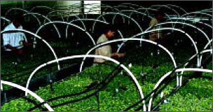 Micropropagation Technology Park | TERI