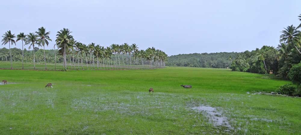 touring goa wetland